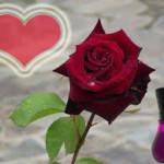 Hechizo Del Perfume Para Enamorar a Un Hombre