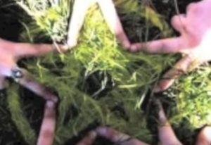 hierbas magicas y su uso