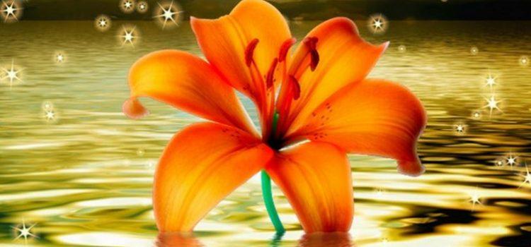 Flor Mágica: Hechizo de magia blanca para cumplir deseos