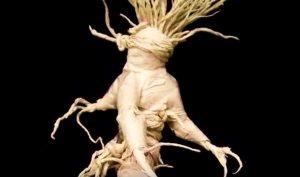 raiz de mandragora magia blanca