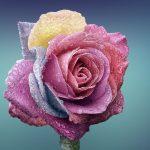 Hechizo Para Florecer El Amor